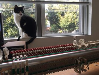 ザウターピアノのアクション