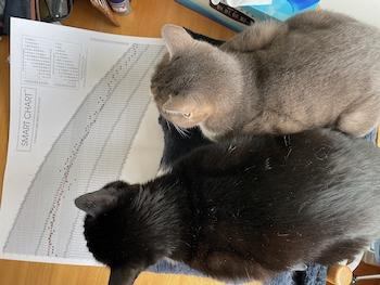 猫による確認作業